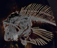 fish skeleton, solarized Stock Photo