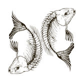 Fish skeleton Royalty Free Stock Photography