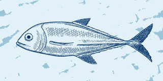 Fish Sketch Royalty Free Stock Photos
