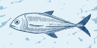 Fish Sketch Royalty Free Stock Photos