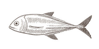 Fish Sketch Royalty Free Stock Photography
