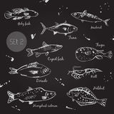 Fish. Sketch. Vector Stock Photography