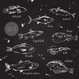 Fish. Sketch. Vector. Cupid fish, dorado, fugu, goby fish, halibut humpback salmon krill mackerel tuna Stock Photography