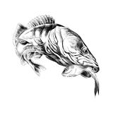 Fish sketch vector Royalty Free Stock Images