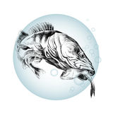 Fish sketch vector Royalty Free Stock Photo