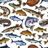 Fish sketch vector seamless pattern. Fish or fishing seamless pattern of vector salmon or trout and tuna, sprat mackerel or flounder. Catch of fresh pike and Royalty Free Stock Image