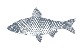 Fish 2. Sketch vintage trafaret style fish vector illustration