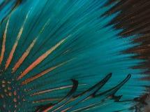 Fish skin Stock Image