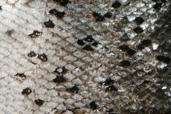 Fish skin texture Royalty Free Stock Photos