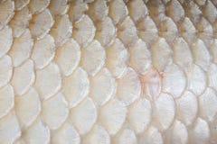 Fish skin texture Stock Photo