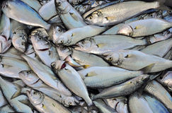 Fish, small bluefish Stock Photo