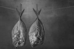 Fish smoke-dried vomer Royalty Free Stock Photos