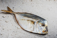 Fish smoke-dried vomer Royalty Free Stock Photo
