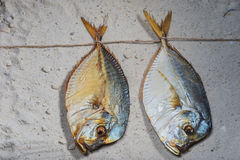 Fish smoke-dried vomer Royalty Free Stock Images
