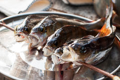 Fish for Smoking, barbecue. Outdoor Royalty Free Stock Images