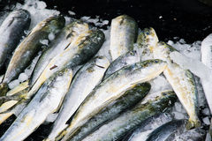 Fish Sold at Fishing Port. Several fresh fish on ice sold at the fishing port stock photo