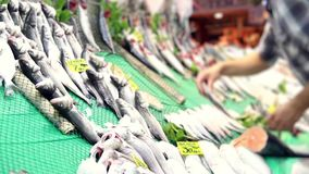 Fish sold on the street. Fresh Sea Fish on the Counter of the Fish Store. Seafood market. Fish sold on the street stock video footage