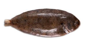 Fish sole stock photography