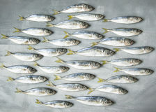 Fish50 Royalty Free Stock Images