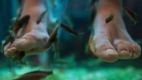 Fish spa επεξεργασία φροντίδας δέρματος wellness pedicure φιλμ μικρού μήκους