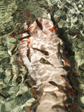 Fish spa Royalty Free Stock Images