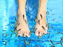 Fish Spa. Pedicure Rufa Garra treatment. Feet and fish in blue water. Woman feet