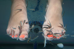Fish spa Royalty Free Stock Photography