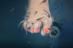Fish spa Royalty Free Stock Photos