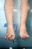 Fish spa. Close-up of feet taking care at fish spa Stock Photos