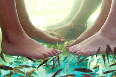 Fish spa. Pedicure of female feet Stock Photography