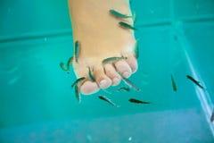 Fish spa behandeling, de vissen van garrarufa Stock Foto