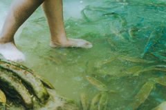 Fish spa, clean foot, healthcare concept with child at Arawan wa. Terfall Kanchanaburi, Thailand Stock Images