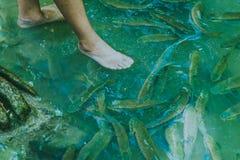 Fish spa, clean foot, healthcare concept with child at Arawan wa. Terfall Kanchanaburi, Thailand Stock Photography