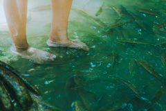 Spa foot stock photos royalty free images dreamstime for Fish cleaning feet