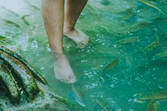 Fish spa, clean foot, healthcare concept with child at Arawan wa. Terfall Kanchanaburi, Thailand Royalty Free Stock Photos