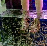 fish spa for feet Stock Photography