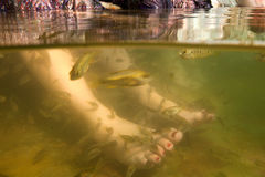 Fish spa feet pedicure skin care treatment Royalty Free Stock Photo