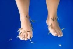 Fish spa feet pedicure skin care treatment with the fish rufa ga Royalty Free Stock Photo