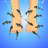 Fish spa (Garra-rufa) Stock Fotografie