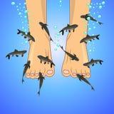 Fish spa (Garra rufa). Pedicure fish spa feet wellness skin care treatment Stock Photography