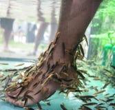 Fish spa. Royalty Free Stock Image