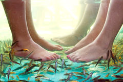 Fish spa pedicure. Of female feet Royalty Free Stock Photography