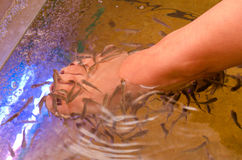 Fish spa pedicure Stock Image