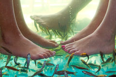 Fish spa pedicure of feet Royalty Free Stock Photos