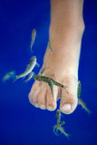 Fish spa pedicure massage treatment. Closeup of foot and fish in Stock Photo