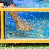 Fish spa pedicure Royalty Free Stock Photos