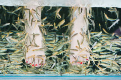 Fish spa pedicure wellness skin care treatment with the fish ruf Stock Images