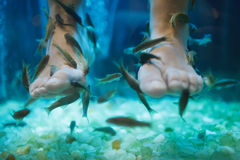 Fish spa pedicure wellness skin care treatment. With the fish rufa garra, also called doctor fish, nibble fish and kangal fish Stock Photos