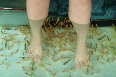 Fish Spa Skin Therapy Stock Images