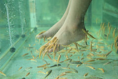 Fish Spa Skin Therapy Stock Photography